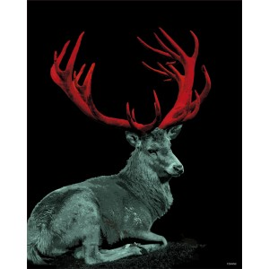 CERF CORAIL ROUGE